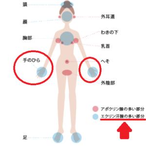 汗腺分布図